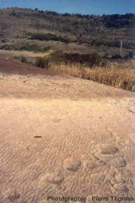Rides fossiles aux environs de Lodève (Hérault)