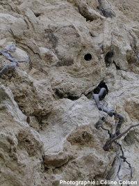 Vue d'ensemble de dépôts carbonatés spongieux (Parc national de Krka, Croatie)