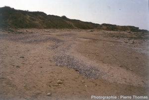 Dépôts de coquilles actuelles sur une plage du Nord-Pas-de- Calais