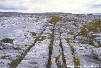 Diaclases d'origine tectonique guidant la dissolution des calcaires, karst des Burren, Irlande