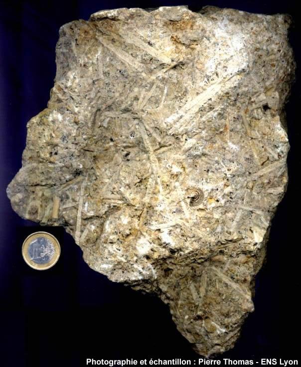 Vue d'ensemble d'un calcaire bioclastique du jurassique lorrain