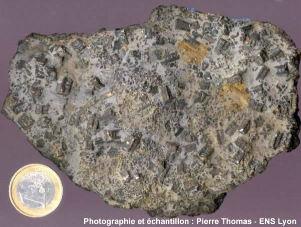 Calcaire à entroques avec des fragments de crinoïdes à section à symétrie pentaradiée (jurassique de l'Ardèche
