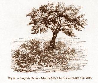 Taches circulaires sous un arbre