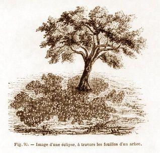 Taches en forme de croissants visibles sous un arbre
