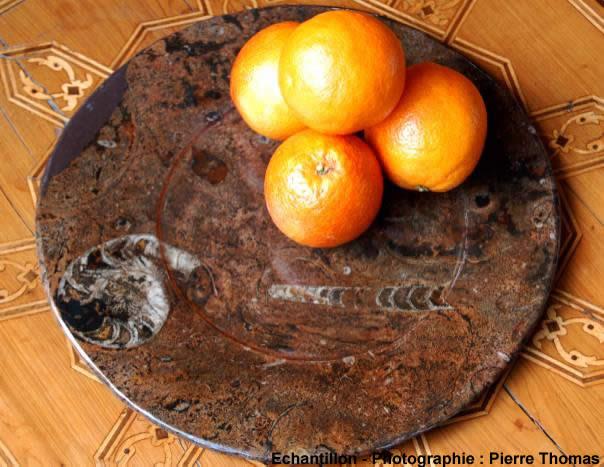 Vue d'ensemble d'une assiette à orthocères et goniatite d'Erfoud, Maroc