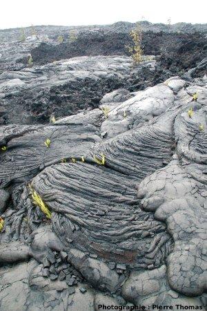 Morphologie des coulées de lave de 1972-1974 au Sud du Kilauea, Hawaii