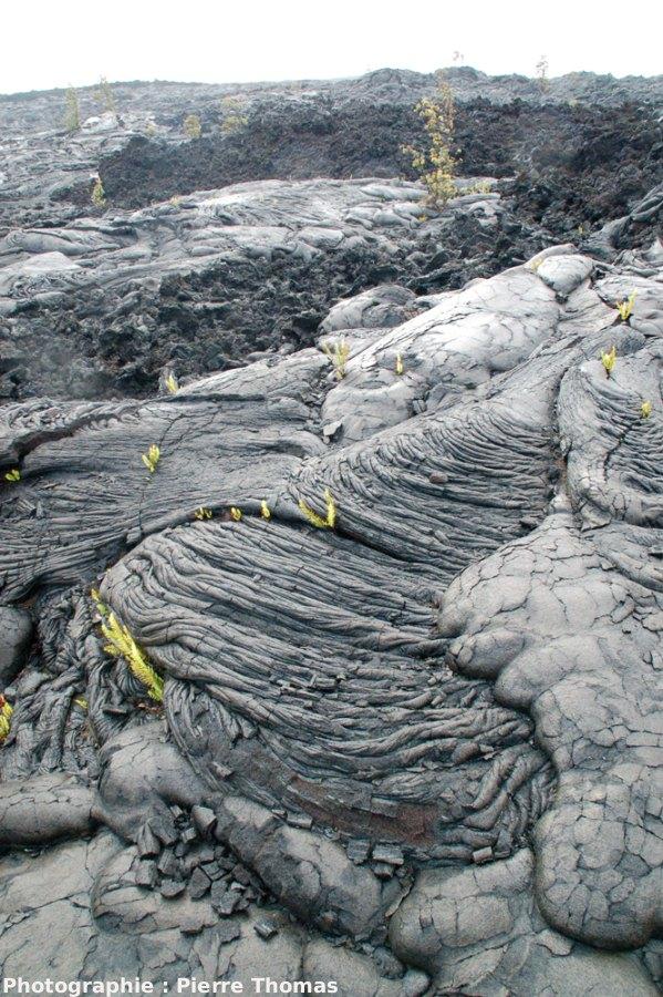 Aspect morphologique des coulées 1972-1974 au sud du Kilauea, Hawaii