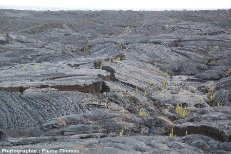 Vue typique de l'aspect (en juin 2007) de la coulée de lave issue du Pu'u O'o ayant envahi Kalapana entre 1990 et 1992, Hawaii