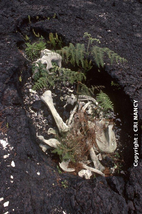 Moulage d'éléphant pris dans la coulée de 1977 du Nyiragongo (Rép. Dém. Congo)