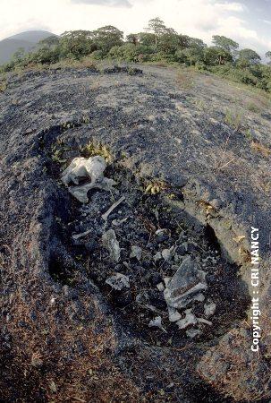 Le même moulage d'éléphant photographié en juillet 1982 (Nyiragongo, R.D. Congo)