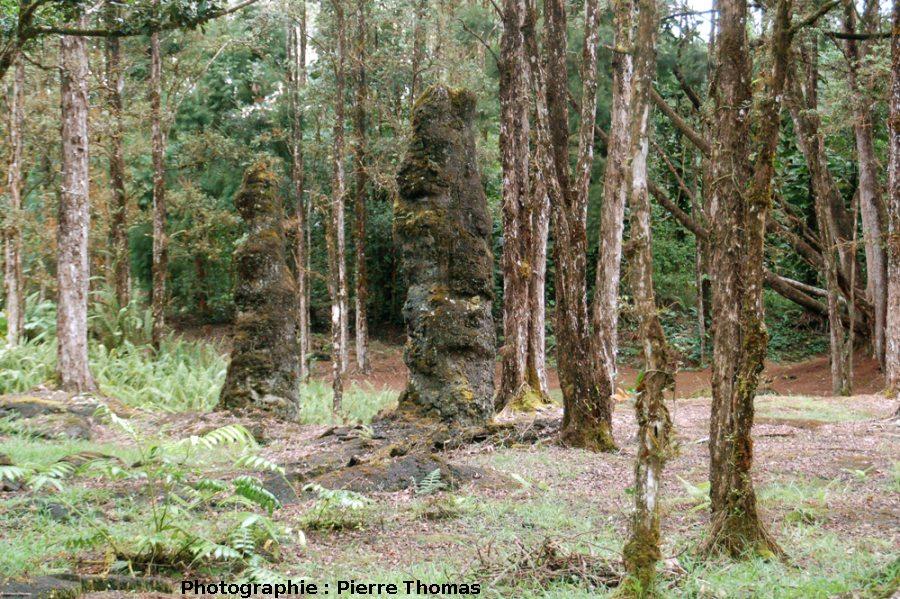 Autres arbres de lave, Lava Tree State Park, Hawaii