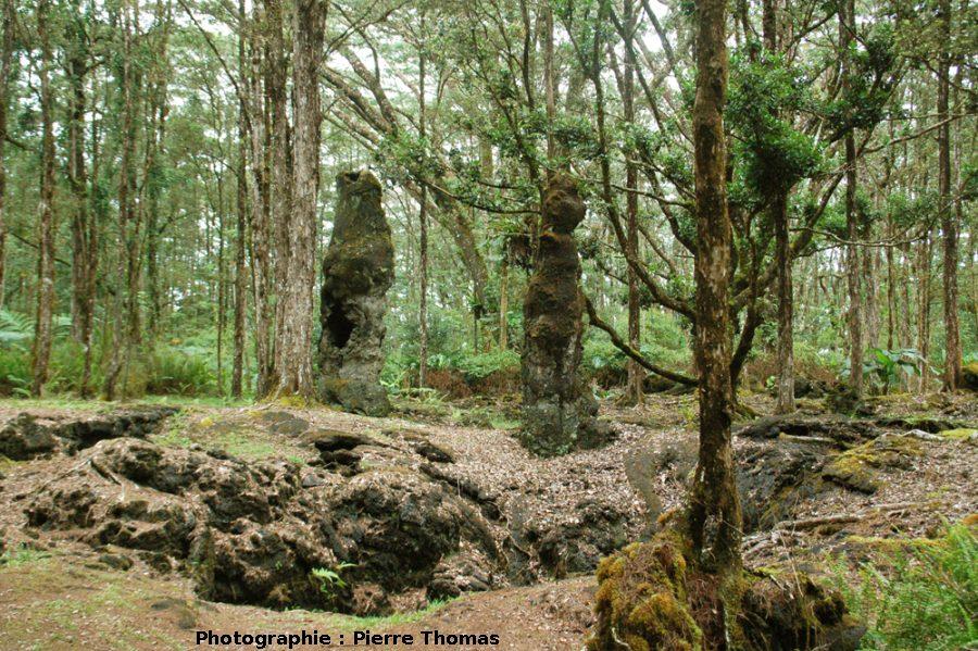 Vue d'ensemble de deux arbres de lave, Lava Tree State Park, Hawaii