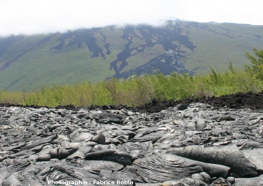 Coulée de lave du flanc Est du Piton de la Fournaise envahissant une forêt (La Réunion, 2004)