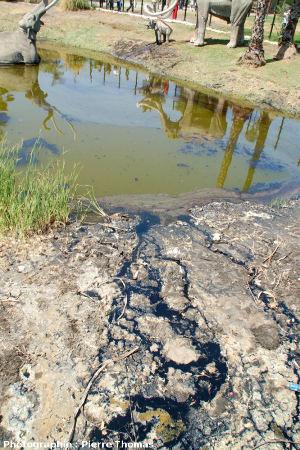Écoulements naturels d'hydrocarbures dans le parc de La Brea Tar Pits, Los Angeles, Californie
