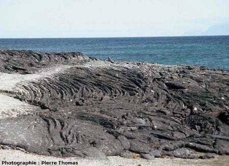 Lave cordée aux Galapagos avec iguane marin comme échelle (au centre de l'image)