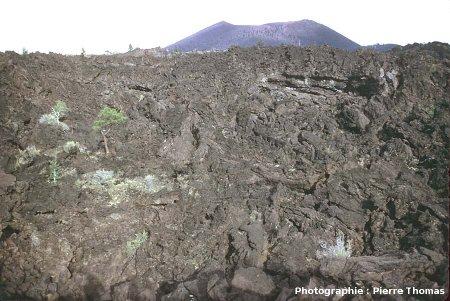 Vue de la coulée du Sunset Crater, Arizona : 1/4