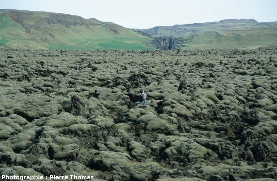 Surface aa de la coulée du Laki (Islande), surface complètement colonisée par des lichens