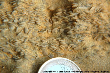 Vue rapprochée du calcaire à nummulites