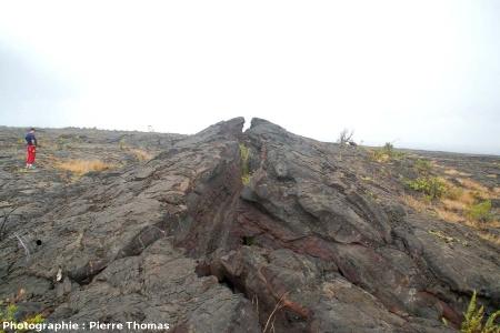 Ride de pression sur une coulée pahoehoe du flanc sud du Kilauea, Hawaii