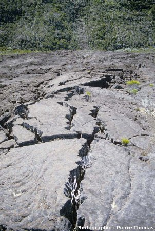 Rides de pression, champs de lave de l'Enclos Fouqué, Piton de la Fournaise, île de La Réunion