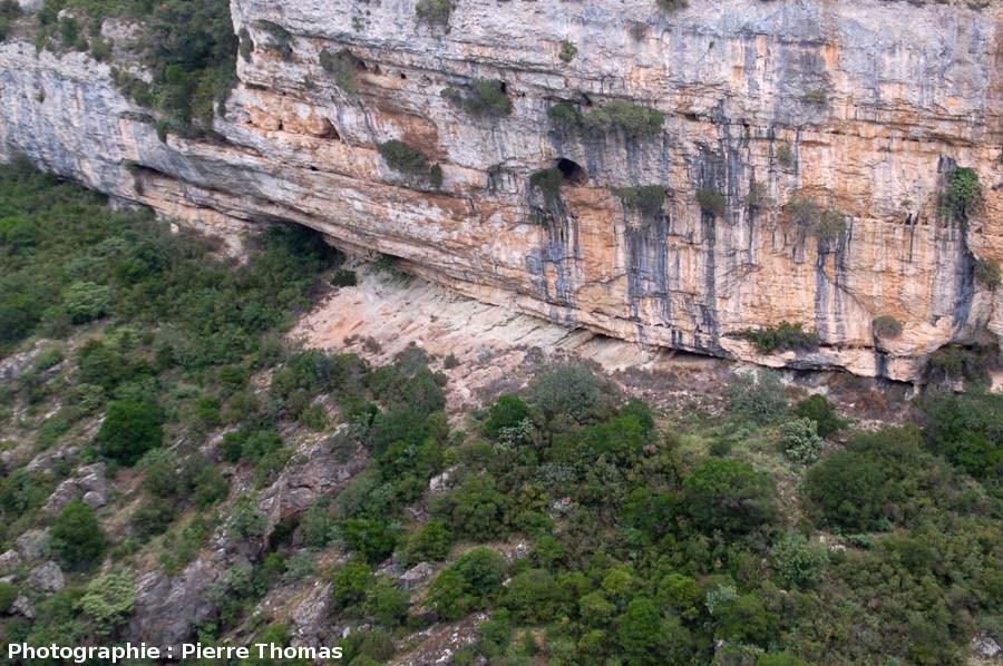 Zoom sur la discordance Éocène / Cambrien dans le canyon du Briant en amont de Minerve (Hérault)