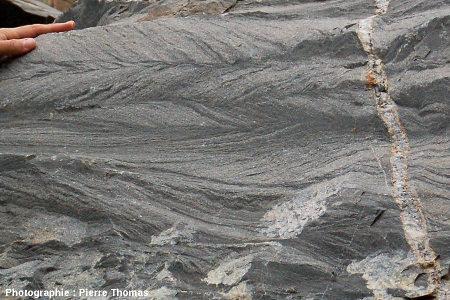 Stratifications en arêtes de poisson dans des grès du groupe de Moodies (3,22Ga), vallée du Sheba Creek, région de Barberton (Afrique du Sud)