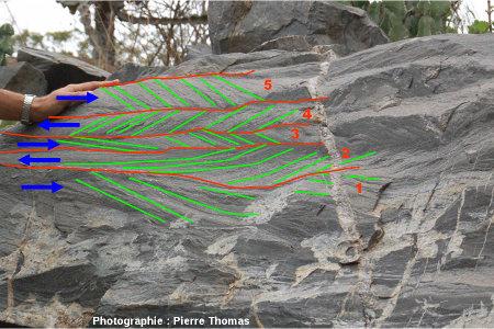 Schéma interprétatif du bloc de grès à stratifications en arêtes de poisson, vallée du Sheba Creek, région de Barberton (Afrique du Sud)