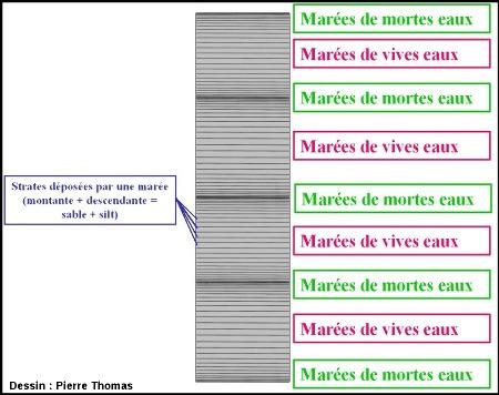 Disposition théorique de tidalites dans une carotte du Mont Saint Michel, dans le cas d'un dépôt horizontal non progradant