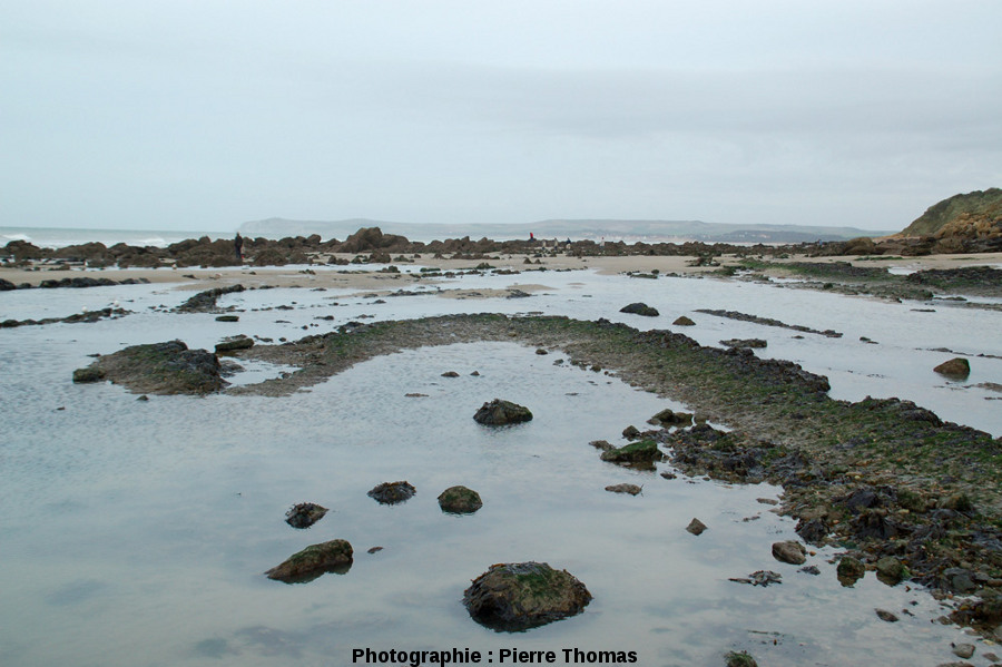Terminaison péri-synclinale à moyen rayon de courbure sur la plage du Cap Gris-Nez (Pas de Calais)