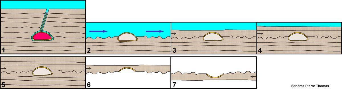 Proposition de l'histoire (résumée) de la dalle de grès à oursins fossiles
