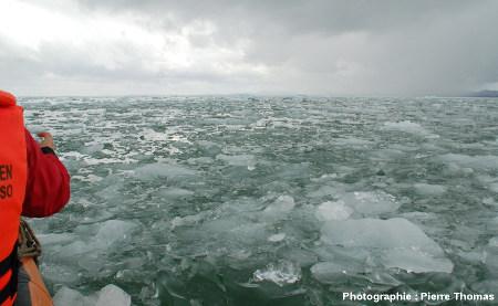 Accumulation de mini-icebergs sur la Laguna San Rafael, Chili