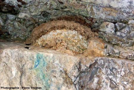 Nid d'oiseau sur un affleurement, excavation dans le secteur minier de Padern/Montgaillard