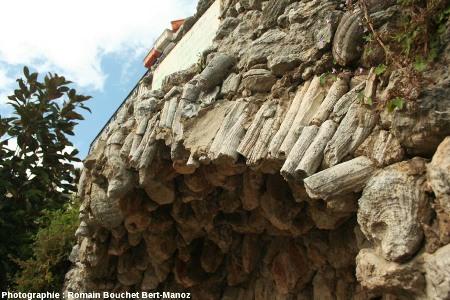 Détail de la voûte supérieure de la fontaine à rudistes du Castellet (Var)