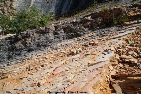 Ondulations (ripple marks?) à la surface d'une dalle, carrière de Cerin (Ain)