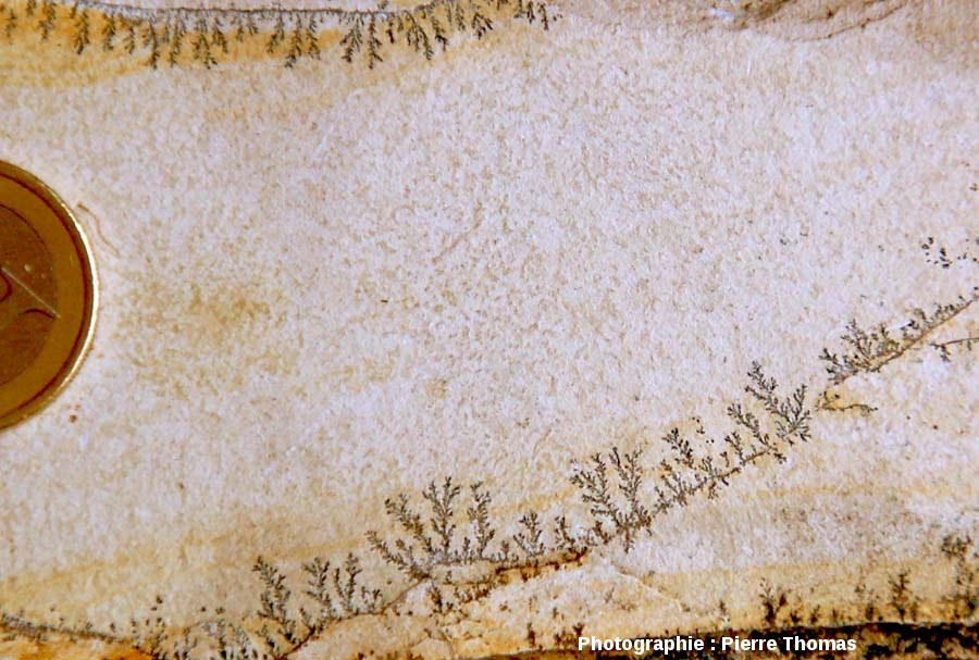 Dendrites visibles sur un joint de stratification dans les calcaires de Cerin (Ain)
