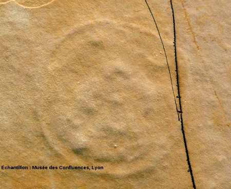 Contre-empreinte d'une méduse, Kimméridgien, carrière de Cerin