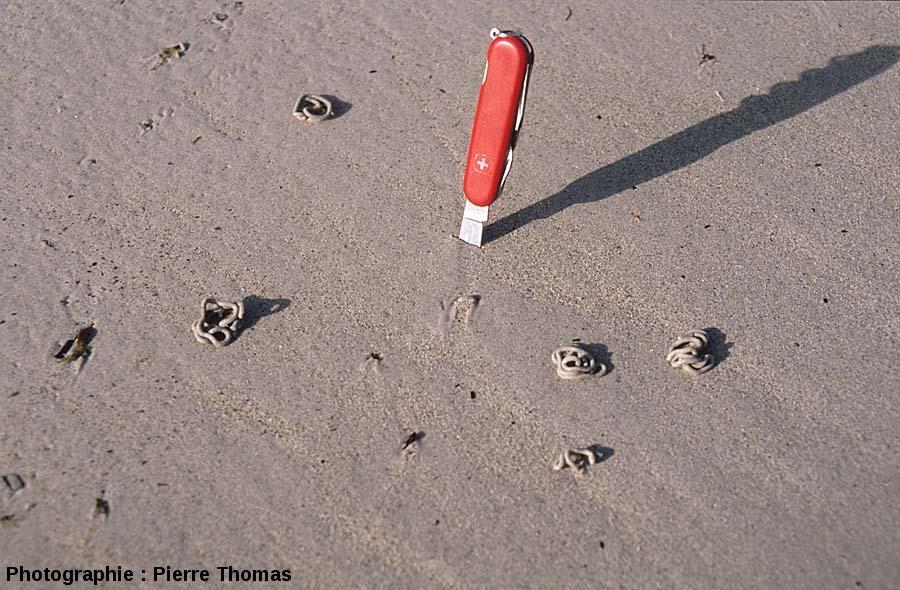 Excréments d'arénicoles actuelles, quelque part sur une plage bretonne