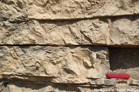 Bancs en place de calcaire lithographique de Cerin (Ain)