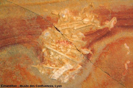 Accumulation de débris de piquants d'oursins dans un calcaire kimméridgien de Cerin (Ain)