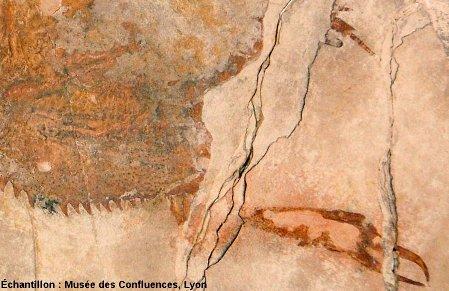 Céphalotorax et pince de la première paire de patte d'Eryon sp., Crustacé décapode du Kimméridgien, carrière de Cerin (Ain)
