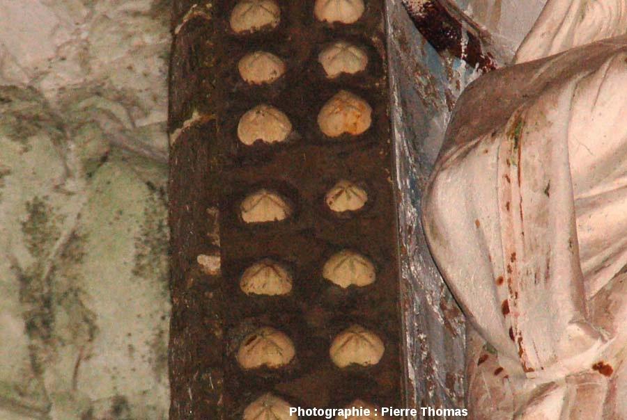 Les oursins situés près du bras droit de la Madone des oursins et des silex, cité souterraine de Naours, Somme