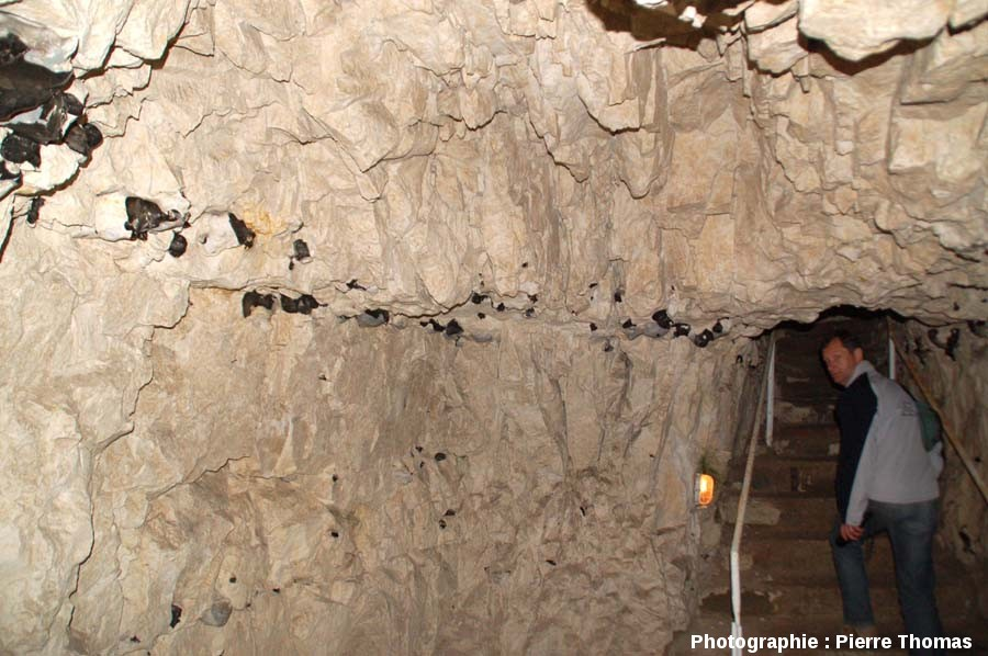 Détail d'une strate particulièrement riche en rognons de silex dans la craie du Turonien supérieur – Coniacien, cité souterraine de Naours, Somme