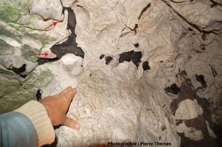Gros plan sur des rognons de silex inclus dans la craie du Turonien supérieur – Coniacien, cité souterraine de Naours, Somme