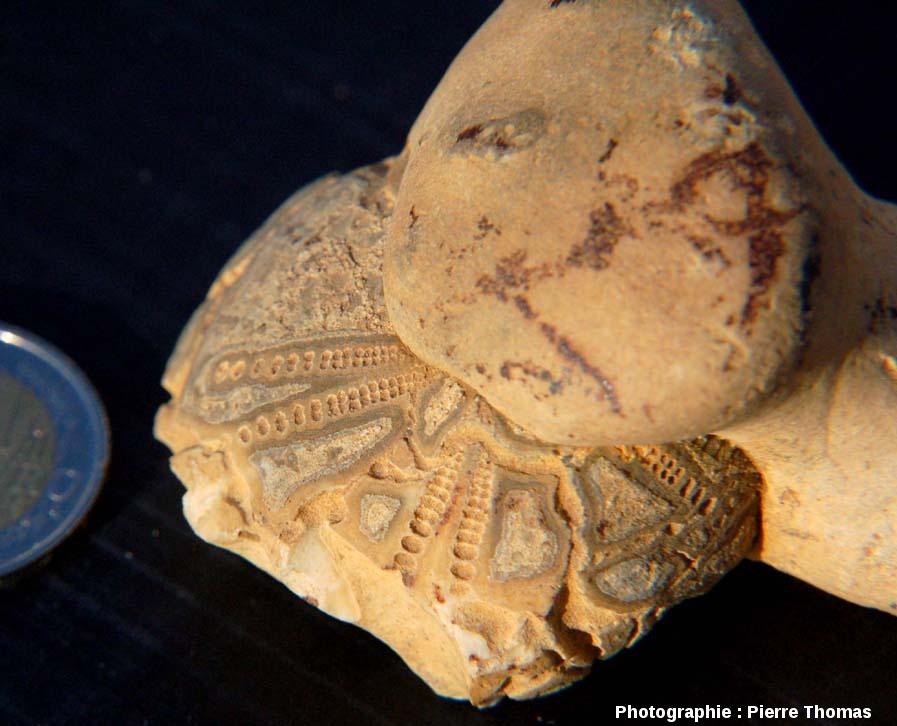 Oursin fossile partiellement englobé par un rognon de silex, trouvé dans la région de Naours, Somme
