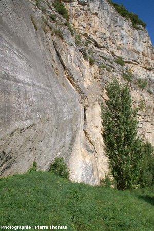 Stries sur le miroir de faille de l'ancienne carrière (réhabilitée), la Petite Balme, Sillingy (Haute Savoie)
