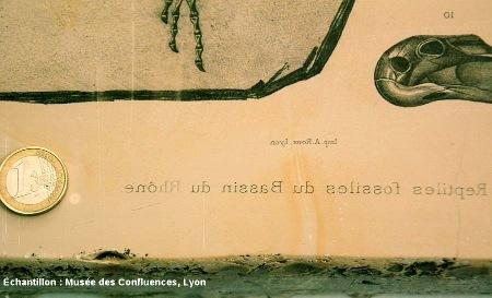 Détail de la «légende» de cette plaque de calcaire lithographique de Cerin (Ain)