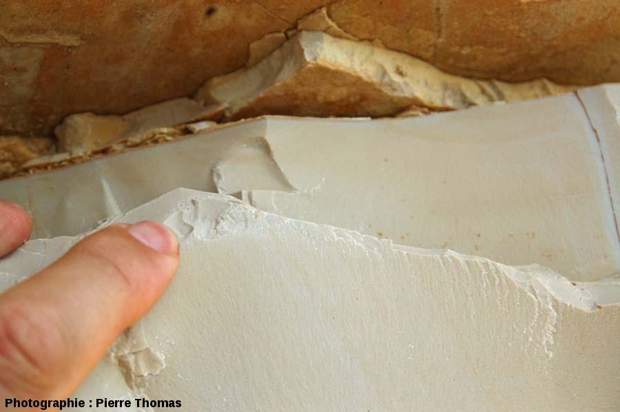 Section d'une strate de la carrière de Cerin (Ain) montrant la finesse et l'homogénéité du grain de ce calcaire lithographique