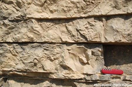 Les strates de calcaire lithographique de Cerin, Ain