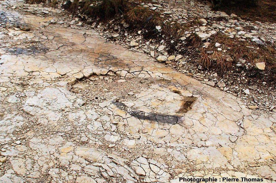 Empreinte de pied de dinosaure sauropode, gisement de Plagne (Ain)