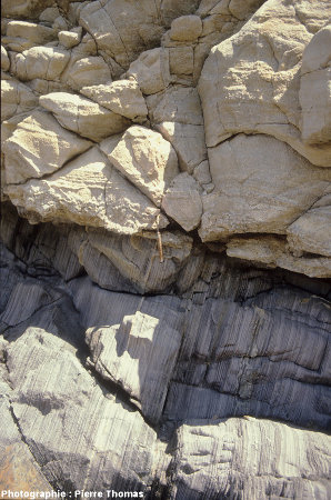 Mur (contact basal) de l'intrusion du granite de Ploumanac'h, île Milliau, Trébeurden (Côtes d'Armor)